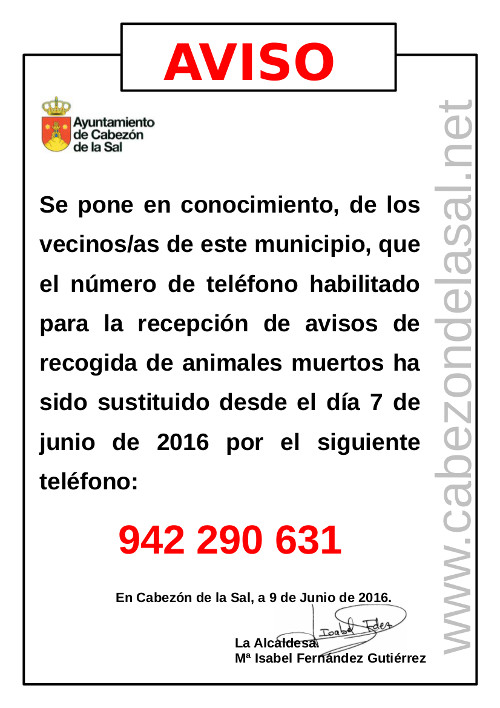 Servicio municipal recogida animales muertos